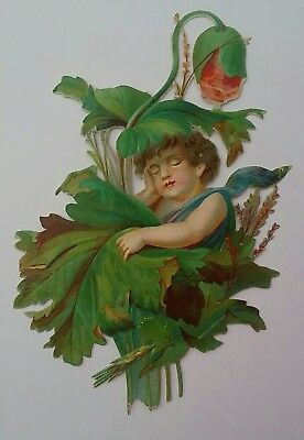 Largish emboss.diecut Victorian Scrap.Child inside a plant. Approx. 13&1/2×9cms.