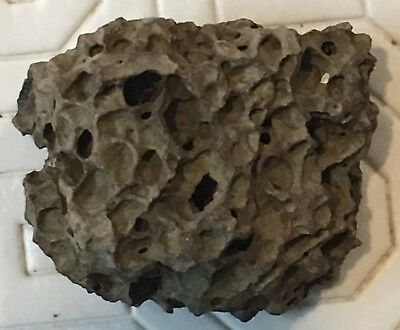 Volcanic Rock Lava From Golan Heights Northern Israel (#B7023)