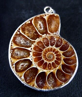 Espectacular Colgante Con Ammonite Fosil Natural Engarzado.nºS1
