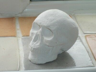 latex rubber mould mold moulds of a small skull no 2