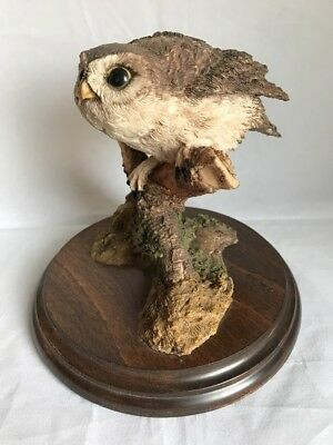 Country Artists Little Owl
