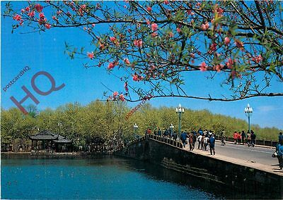 Picture Postcard- China, The Spring Scenery Of Broken Bridge