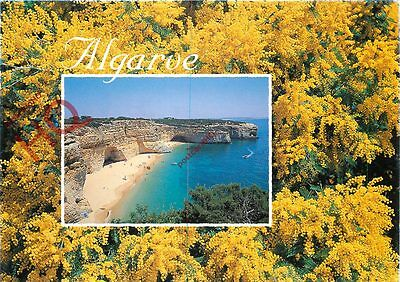 Picture Postcard~ Algarve, Yellow Flowers