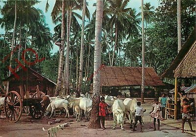 Picture Postcard:;Malaysia, Rural Life