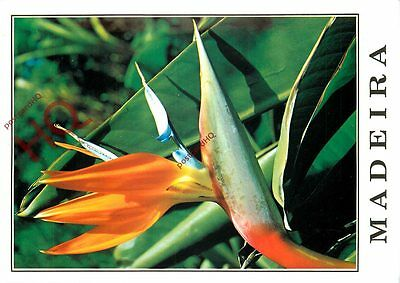 Picture Postcard::Madeira, Bird Of Paradise