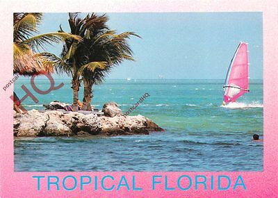 Picture Postcard--Tropical Florida
