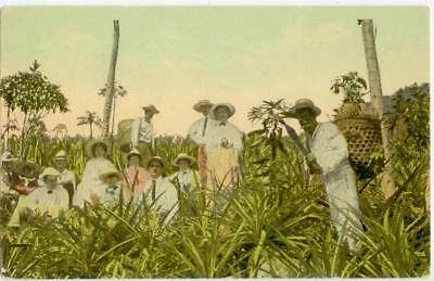 c1910 Canal Zone - group of folks in a pineapple grove - native with machete