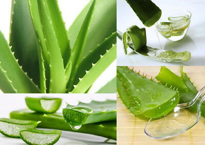 400Pcs Special Aloe Mixed Seeds Exotic Succulents Cactus Garden Plant SAVE BH91