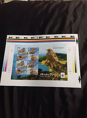 GUERNSEY WWF MEADOW PIPIT Imperforate Miniature Sheet Limited Edition Of 500