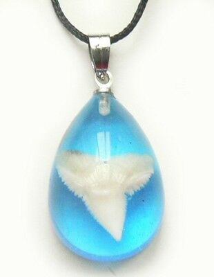 Shark Tooth Teeth Charm Necklace Pendant Surfer Tropical - Blue