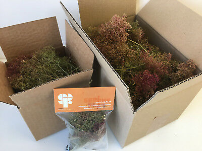 S-P Seafoam Trees -Model Railway Forest Wargames Foliage Sea Foam Scenery OO N O