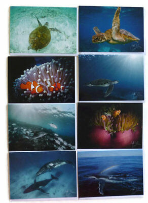 NEW Pack of 8 Underwater Photography Quality Greeting Card Pack Dolphin Whale...