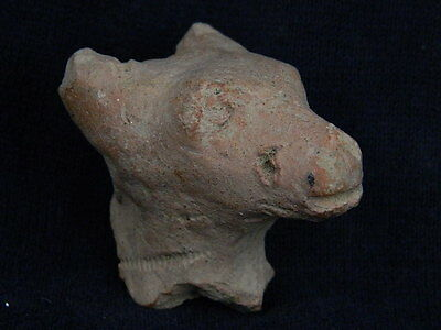 Ancient Teracotta Animal Head Indus Valley 500 BC   #TR369