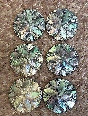 Paua Shell Coasters NEW with holder set of six outdoor dining bar
