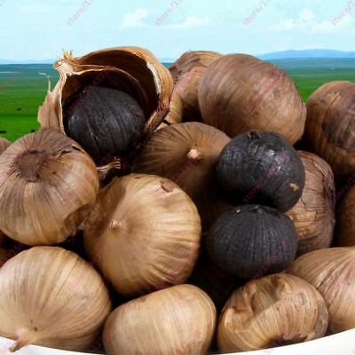 Black Garlic Seeds Pure Natural Organic Healthy Vegetable - 100 Seeds