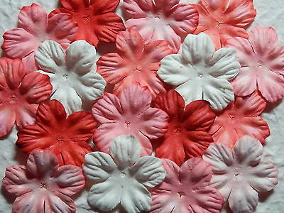 BULK 32mm Paper Flower Petals MPFF1C/RW: Scrapbooking Cardmaking Party Collage