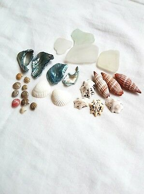 Beach findings 28pc mixed sea shells and sea glass
