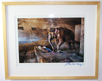 Steve McCurry, signed Photo/ signiertes Foto XL, Indian Elephant 2012, framed
