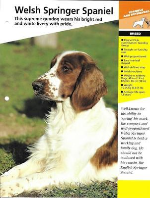 Dogs Of The World Fact Sheets Welsh Springer Spaniel