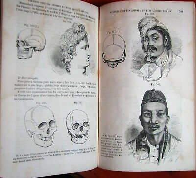 Rare 1851 Illustrated Anatomy Medical Human Systems Physiology Mechanism Book