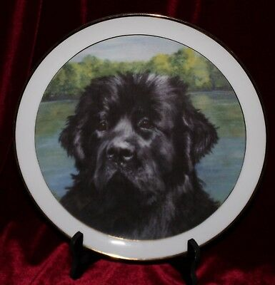 Newfoundland Dog National Specialty Limited Edition Plate