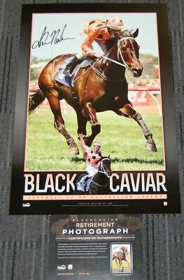 Black Caviar Horse Racing 25 Wins Greatest Sprinter Luke Nolen Signed Print Coa