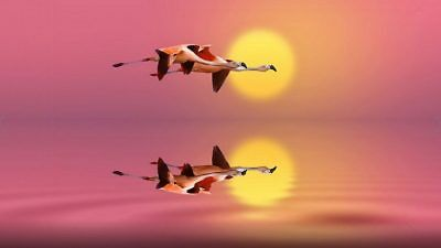 Flamingos Flight Reflection In Water Lake Red Sky Sunset Canvas Wall Art GIFT