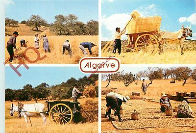 Picture Postcard:;Algarve (Multiview)