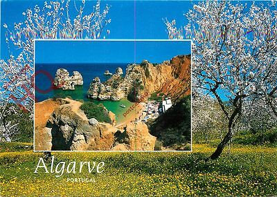Picture Postcard-:Algarve