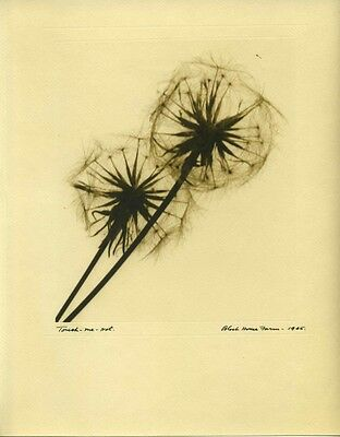"""Brown Toned Botanical Photogram. """"Touch Me Not"""""""