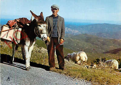 Picture Postcard, Corsica, Corse, Shepherd With Donkey