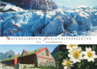 Picture Postcard; Jostedalsbreen, Reinrose (Dryas Octopetala)