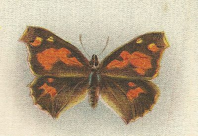 Vintage antique promotional silk - use in crazy quilt applique- brown butterfly