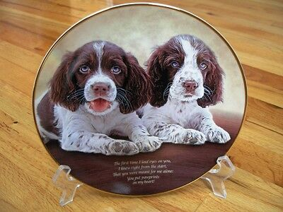Danbury Mint Springer Spaniel PAWPRINTS ON MY HEART Limited Edition Plate