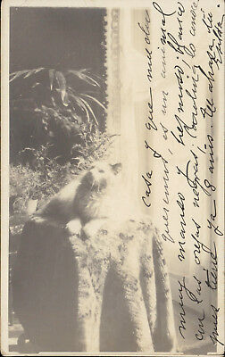 cat animal pet kitty real photo vintage old postcard