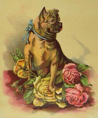 1870's-1880's Large F. E Brezel Boots & Shoes Adorable Pug-Dog With Roses &N