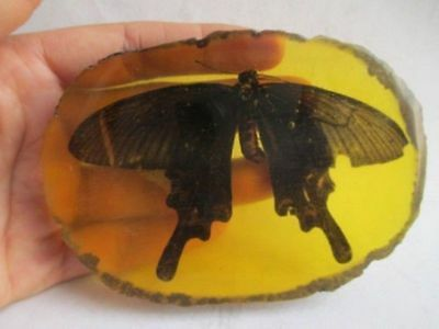10.6 cm * / China collection.Amber natural butterfly statue