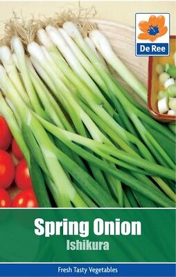 Spring Onion Ishikura Vegetable Seeds (approx 190 seeds)