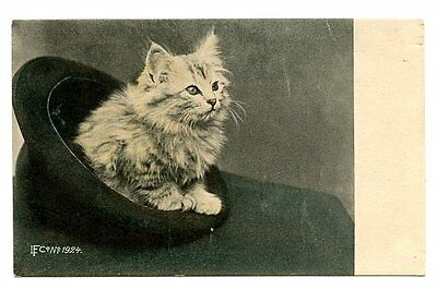vintage cat postcard beautiful grey tabby cat kitten in upturned man's hat