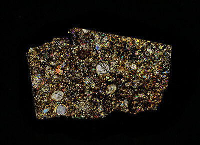 Meteorite transparent polished thin section Calate 007 (L5,S1,W2) Chile Rare!