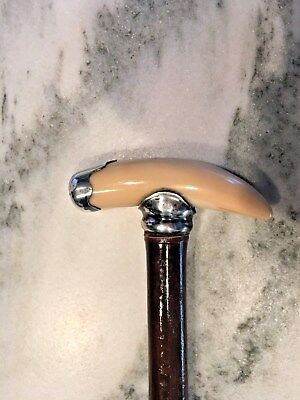 sterling silver mounted Tiger Tooth walking stick