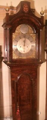 "Antique Burr Walnut "" Bishops Stortford "" Longcase / Grandfather Clock"