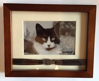 "Walnut Cat Tabletop Frame ""Leather & Metal Collar"" Frame 9.5"" x 7"" Photo 6"" x 4"""
