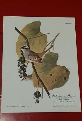 """WHITE-CROWNED SPARROW Audubon litho repro  R.Havell 8"""" x 6"""""""