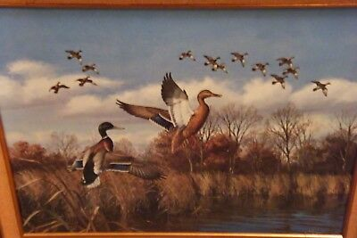 """Vtg REPRODUCTION David Maass Ducks JOINING UP Framed Painting On Canvas 33"""" x 27"""