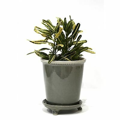 Grey Ceramic Pot and Saucer, Planter for Cactii, Succulents, Orchids, 6� Height