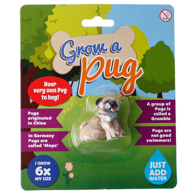 Grow A Pug Grow Your Own Cute Dog Just Add Water 6 X The Size Christmas Gift