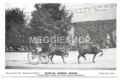 Ireland : Dublin Horse Show : Trotting - One Of The Prize Winners Old Postcard