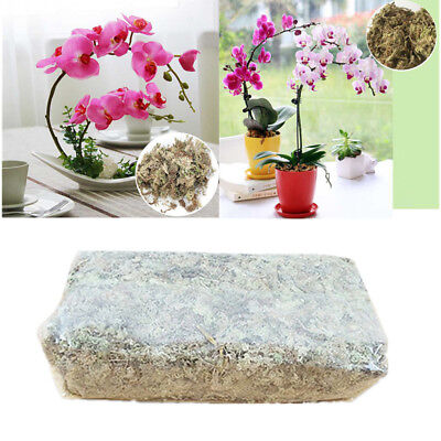 6L Natural Sphagnum Moss Nutrition Organic Fertilizer for Phalaenopsis Orchid