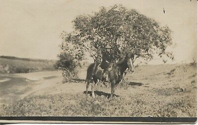 Real Photo Postcard RPPC Young Woman on Horse Next to River C.1910